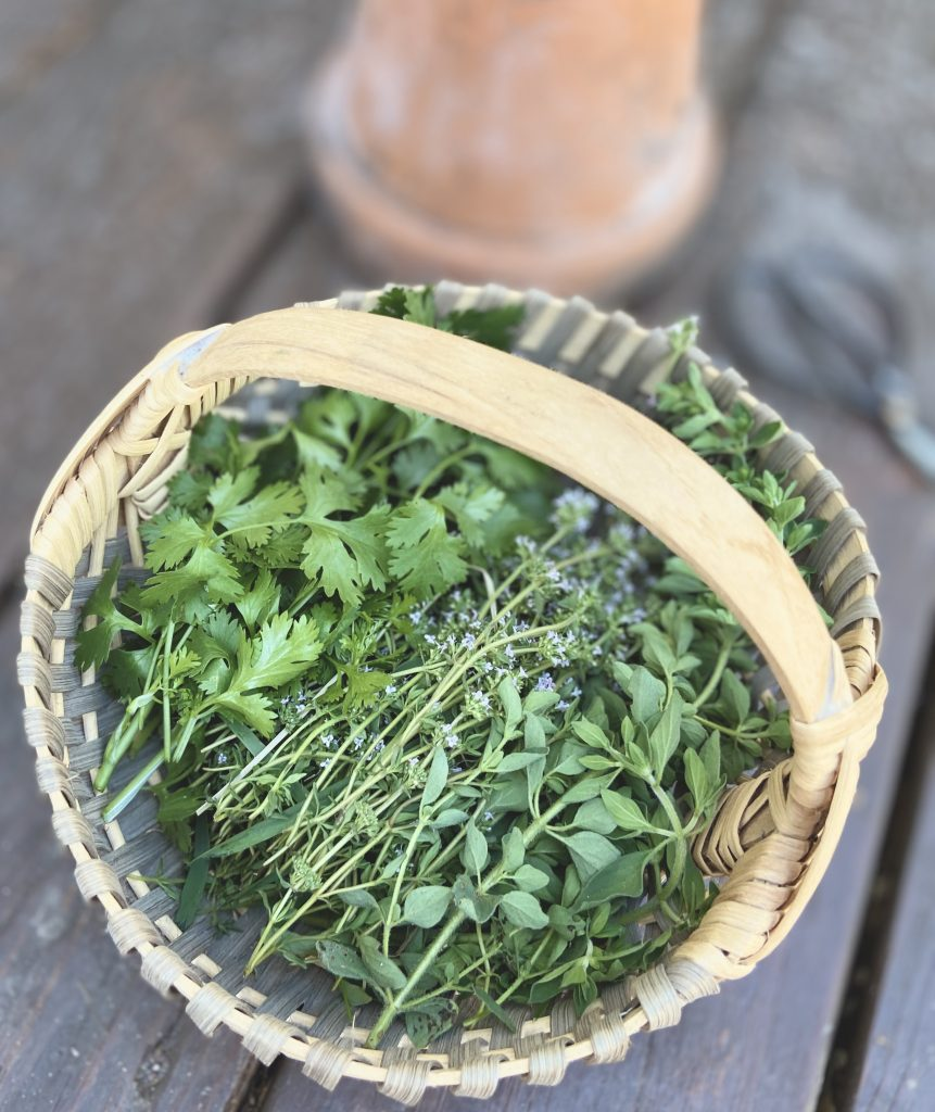 fresh herbs from the garden in a basket