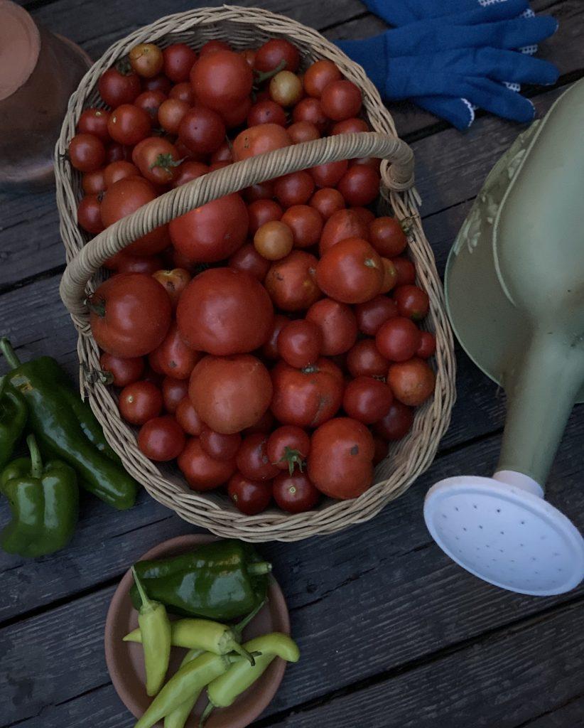 organic produce for a beginner gardener