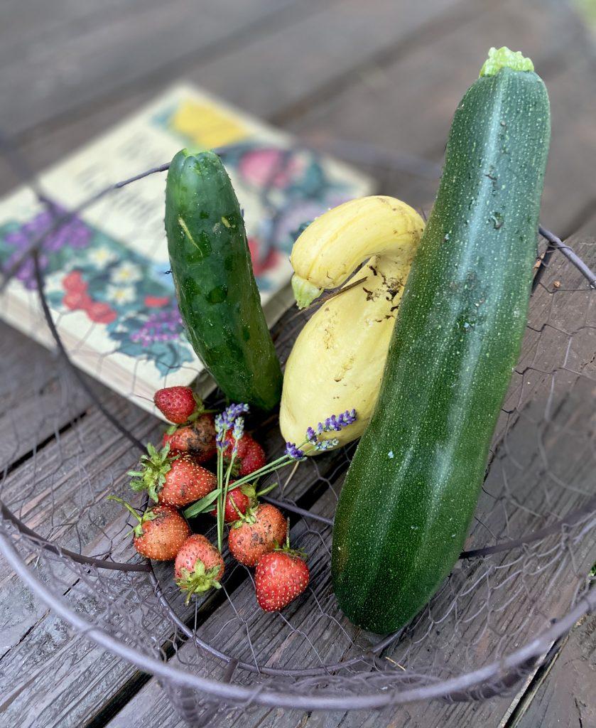 Tips on Transporting to Start a Simple Garden for Beginner