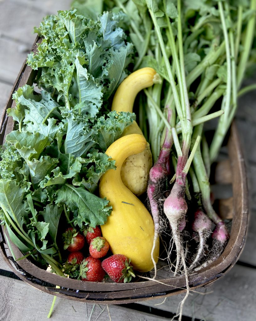 simple gardening and composting for beginners