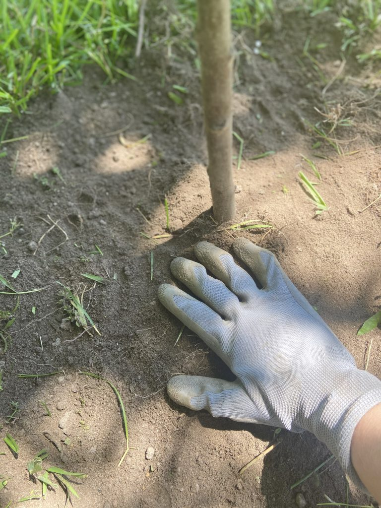 covering fruit trees with healthy tree
