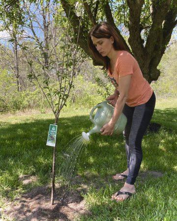 woman watering fruit trees in her backyard