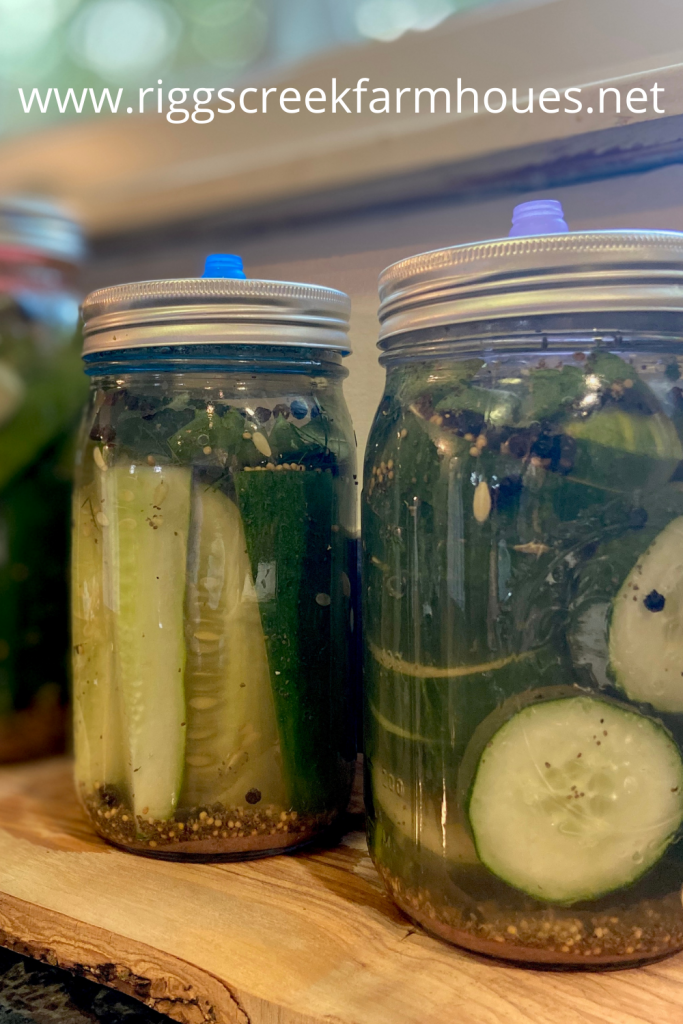 Easy Homemade Fermented Dill Pickle Recipe
