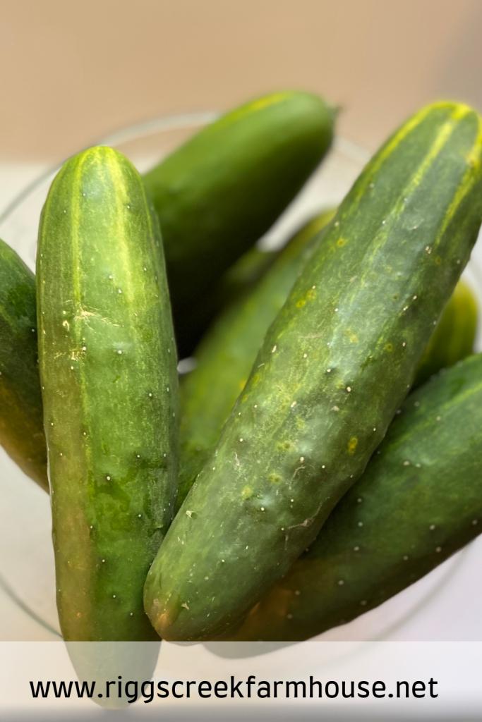 Fermented Pickle Recipe