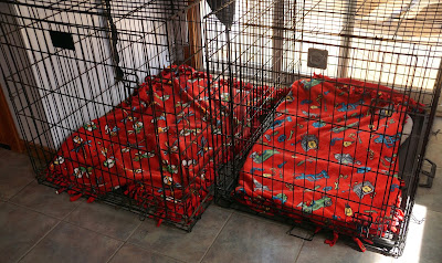Cleaning dog kennels using essential oils