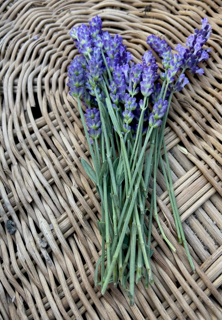 What are the Benefits of using Lavender Essential Oil